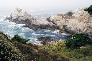 point lobos shore